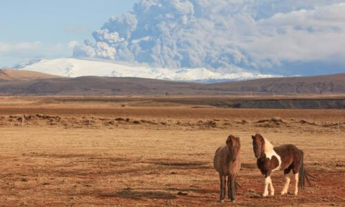 Iceland horses and volcano eruption